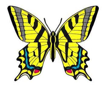 butterflies4.jpg