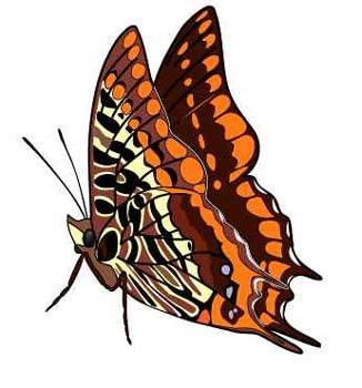 butterflies5.jpg