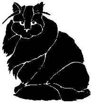 domestic-cat13.jpg