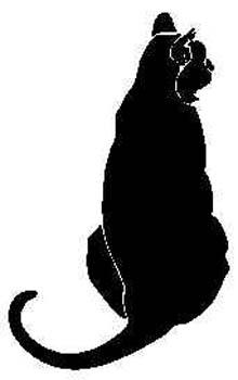 domestic-cat9.jpg