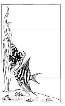 fish15.jpg